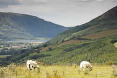 Lakeland. Shot looking over to Bassenthwaite in the Cumbrian Lake district. Shot taken from Latrigg fell Stock Photo