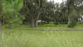 Lakeland Florida. Field in circle b bar reserve Lakeland Florida Stock Images