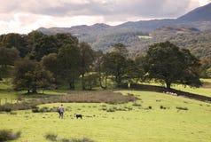 Lakeland shepherd, Cumbria Stock Image