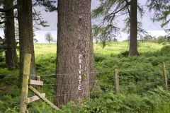 Lakeland - Wasdale. A hand painted `Private` sign on a tree near picturesque          Wastwater in The Lake District, Cumbria, UK Royalty Free Stock Images