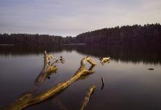 Lakeliggande med den drunknade gammala treen Arkivbild
