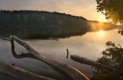 Lakeliggande med den drunknade gammala treen Fotografering för Bildbyråer