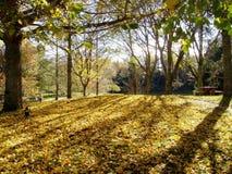 laken mclaren parken Fotografering för Bildbyråer