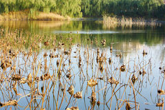 Lakes Stock Photography