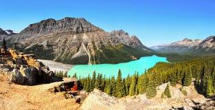 Peyto Lake Panorama, Canadian Rockies, Alberta Canada Royalty Free Stock Photo