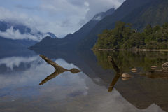 Lakes of the Carretera Austral. Dead tree trunk lying partially submerged in the calm waters of Lake Rosselot located along the Carretera Austral  in the Aysen Royalty Free Stock Image