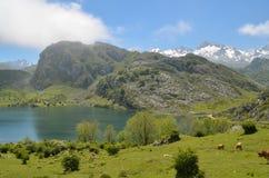 Lakes of Covadonga in Asturias. Stock Image