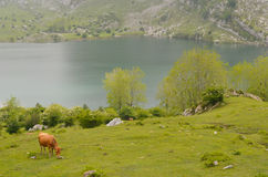 Lakes of Covadonga in Asturias. Stock Photography
