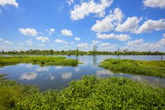 Lakes In Florida Wetlands. Lakes in the Florida wetlands with cypress trees in in the water, in the distance royalty free stock photo