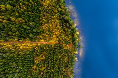 Lakes in forest, top view royalty free stock image