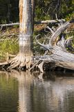 Lakes and rivers in Yellowstone National Park. In Wyoming royalty free stock photo