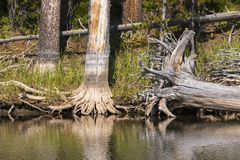 Lakes and rivers in Yellowstone National Park. In Wyoming royalty free stock photography