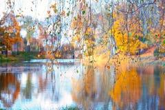 Lakes Through Birch Branches Stock Image