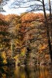 Lakeshore с лиством падения Стоковые Изображения RF
