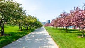 Зацветая переулок близко к Lakeshore Мичигану стоковое изображение