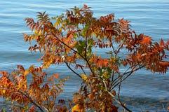 Lakeshore Autumn Sumac Vista Stock Photography