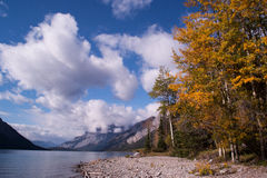Lakeshore foliage in fall Royalty Free Stock Images