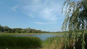 Lakeshore med moln och träd lager videofilmer