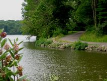 Lakeshore road. Road on the shore of lake at Stonelick State Park, Ohio Royalty Free Stock Images