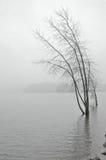 lakeshore snöig Royaltyfria Bilder
