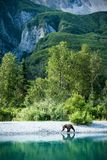 Young Bear Taking a Lakeshore Stroll royalty free stock photo