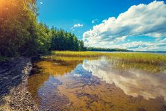 Lakeshore with trees and blue cloudy sky stock photo