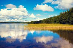Lakeshore with trees and blue cloudy sky royalty free stock photography