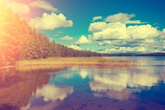 Lakeshore with trees and blue sky stock images