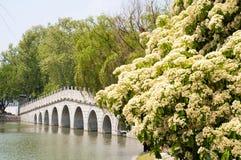 Lakeshorepark royalty-vrije stock afbeeldingen