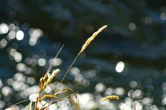 lakeside zdjęcie stock