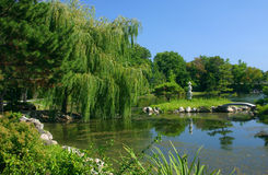 Lakeside. Garden and weeping willow tree Stock Photos