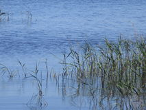 lakeside fotografía de archivo libre de regalías