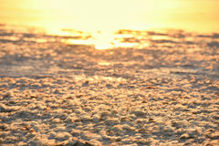 Lakeside all covered with feathers of birds in the sunset gentle orange light Royalty Free Stock Photos