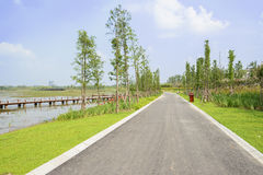 Lakeside asphalt road in verdant summer on sunny day Stock Images