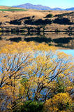 Lakeside autumn. Beautiful sunlight, blue sky, yellow leaves Royalty Free Stock Image