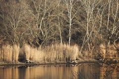 Lakeside autumn landscape Royalty Free Stock Photo