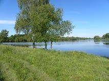 Lakeside. Birch water green grass Stock Photography