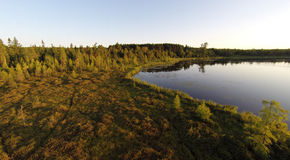 Lakeside Bog. Elevated view of a moss filed bog on a northern Wisconsin Lake royalty free stock photos