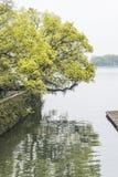 The lakeside camphor tree Royalty Free Stock Photos