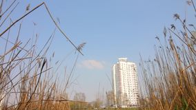 Lakeside in city park in the spring. One can see small waves that roll over the dried reed. A residential house is visible in the. Distance stock video