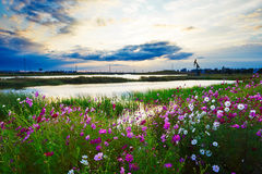 Lakeside flowers Royalty Free Stock Photography