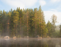 Lakeside forest at morning fog Royalty Free Stock Images