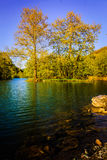 Lakeside Forest Royalty Free Stock Images