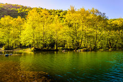 Lakeside Forest Stock Image