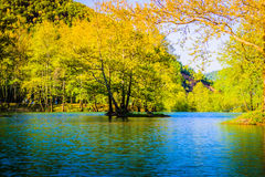 Lakeside Forest Stock Photos