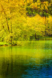 Lakeside Forest Royalty Free Stock Photo