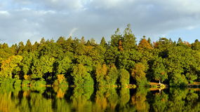 Lakeside Forest. Scenic View of a Lakeside Forest with Autumn Colours Stock Photography