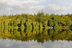 Lakeside Forest. Scenic View of a Lakeside Forest with Autumn Colours Stock Image