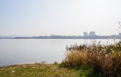 Lakeside grass and reeds in sunny winter afternoon. Chengdu,China stock images
