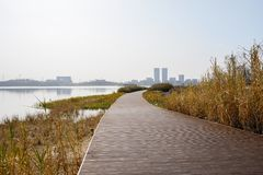 Lakeside grass and weeds by planked path in sunny winter afternoon. Chengdu,China royalty free stock photos